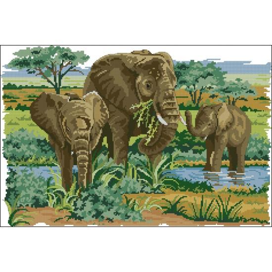 Слонове в дивата природа